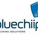 bluechip.jpg