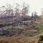 Image: www.oren.org.au