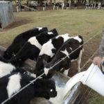 Murray Goulburn increases profit despite turmoil