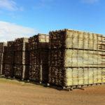 Forestry industry in Tasmania resurgent