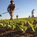 AgriFutures Australia: moving the future of Australian agriculture forward