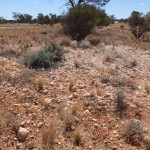 New uranium mine in WA up for environmental review