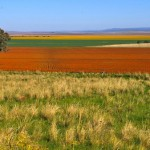 Shenhua called to revisit environmental effects of Watermark coal mine