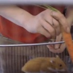 A truck so easy to drive a hamster can do it, really! [VIDEO]