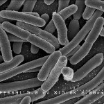 """Vale developing """"copper eating"""" bacteria"""