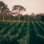 New laws in WA protect wine region from mining
